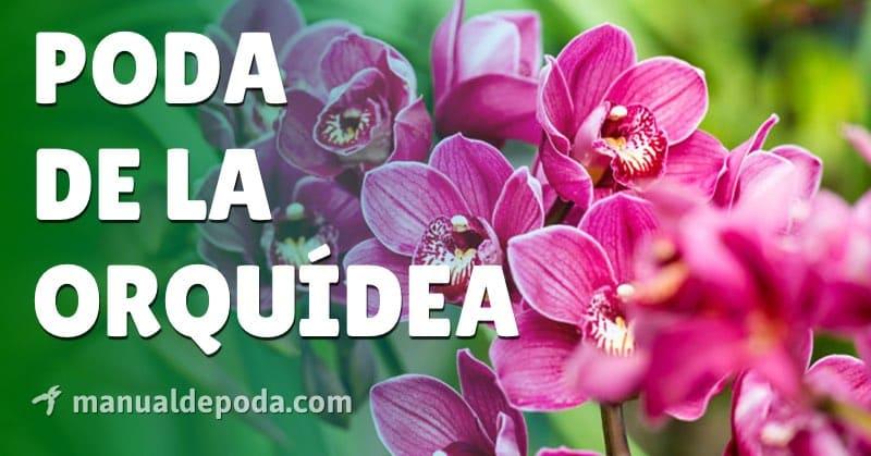 Cómo Podar una Orquídea para que quede Perfecta
