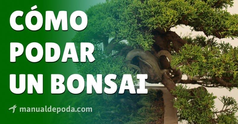 Poda del Bonsai - Cómo y cuándo podar los bonsais