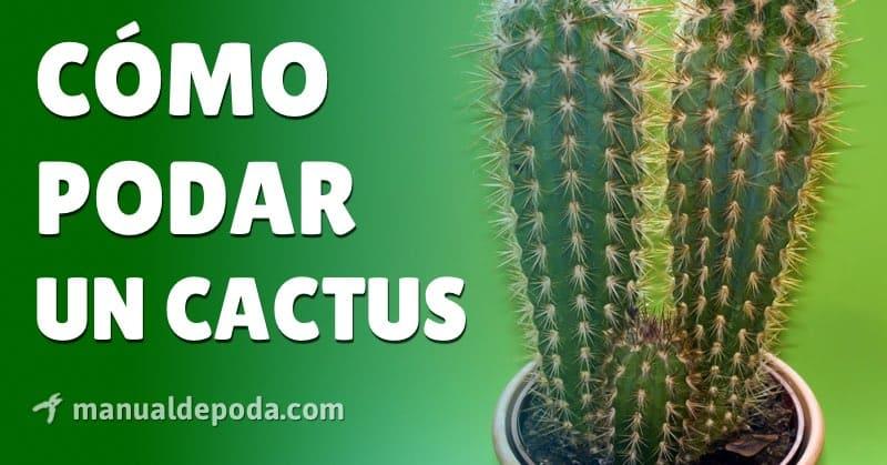 Poda del Cactus【Cómo podar un cactus en 2021】