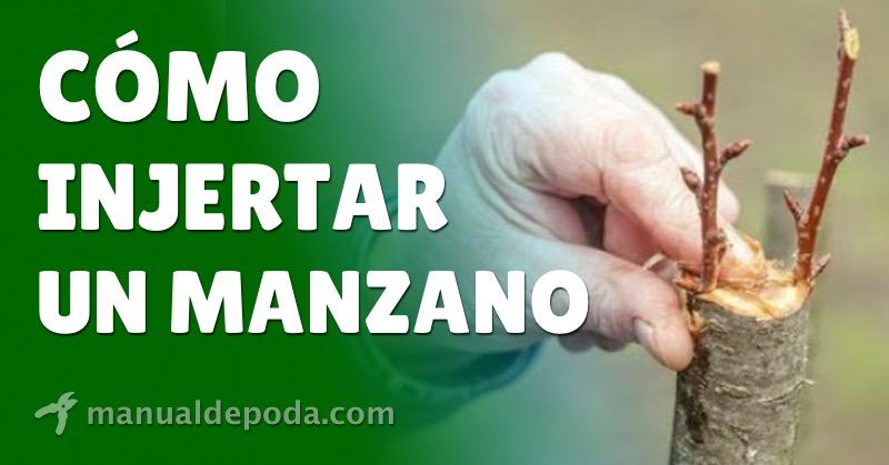 Injertar Manzano: Pasos y consejos
