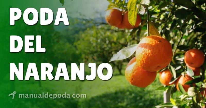 Poda del Naranjo【Guía Práctica 2021】
