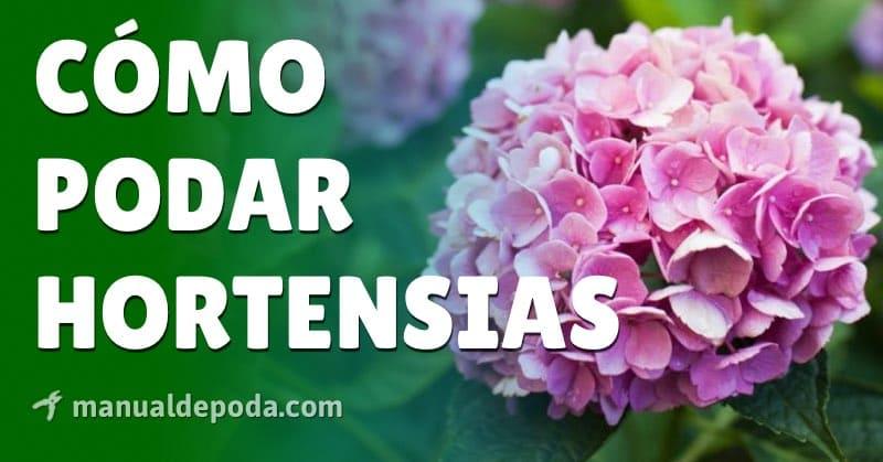 Cómo Podar Hortensias - Manual de Poda